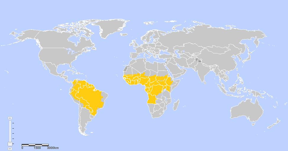 Verbreitung Gelbfieber