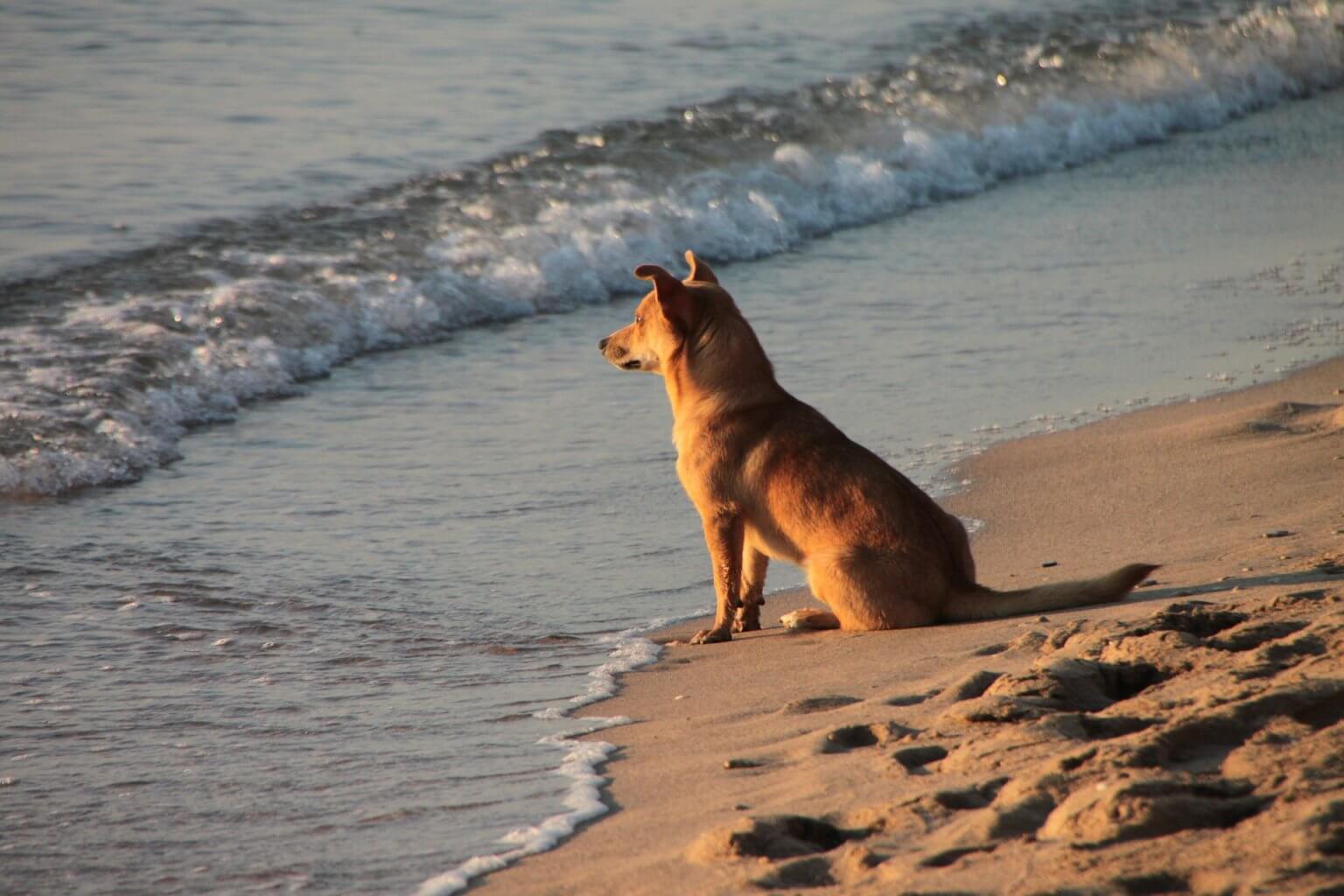 Ferienhaus-Hund